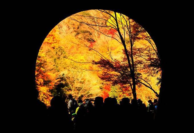 福知山線廃線跡のトンネル(長尾山第一トンネル)から見た紅葉 =11月23日午後1時15分、兵庫県宝塚市(山田耕一撮影)