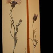 Blumenkarte Nr 1