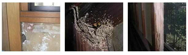 結露でぬれた窓枠にシロアリの巣