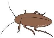 cockroach-clip-art-m_01