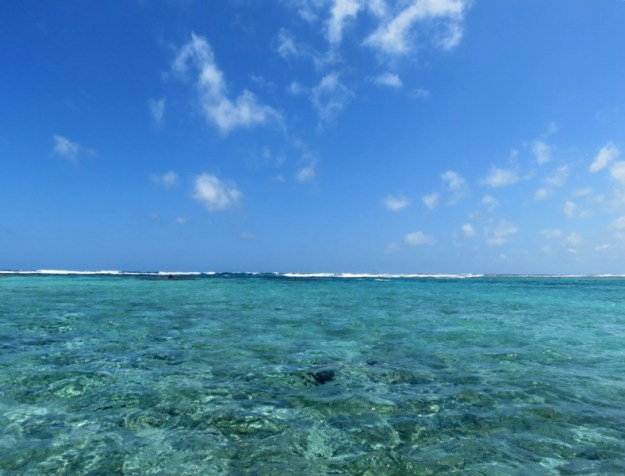 The Reef.  Ambergris Caye, Belize