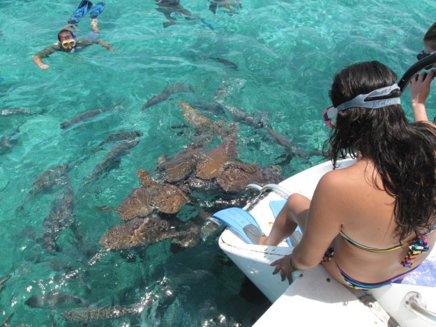 snorkeling-with-sharks-belize