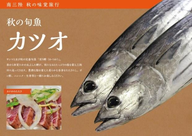 南三陸 秋の旬魚 カツオ