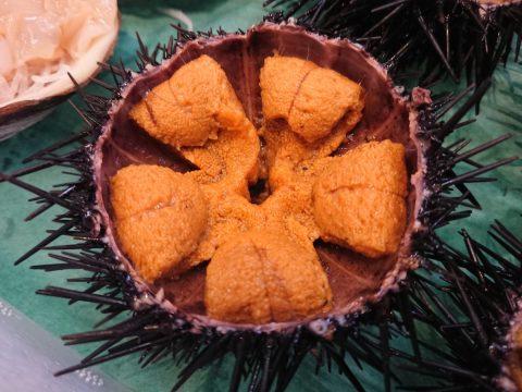 南三陸町の今の旬『ウニ』!7月が1番美味しい時期!食べなきゃ損ですよ!