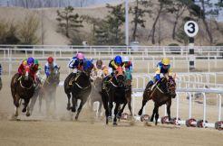 ソウル競馬