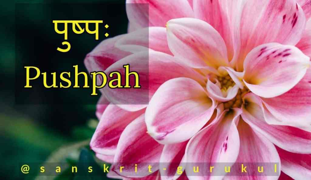 Pushpah-shabd-roop-Sanskrit-Gurukul