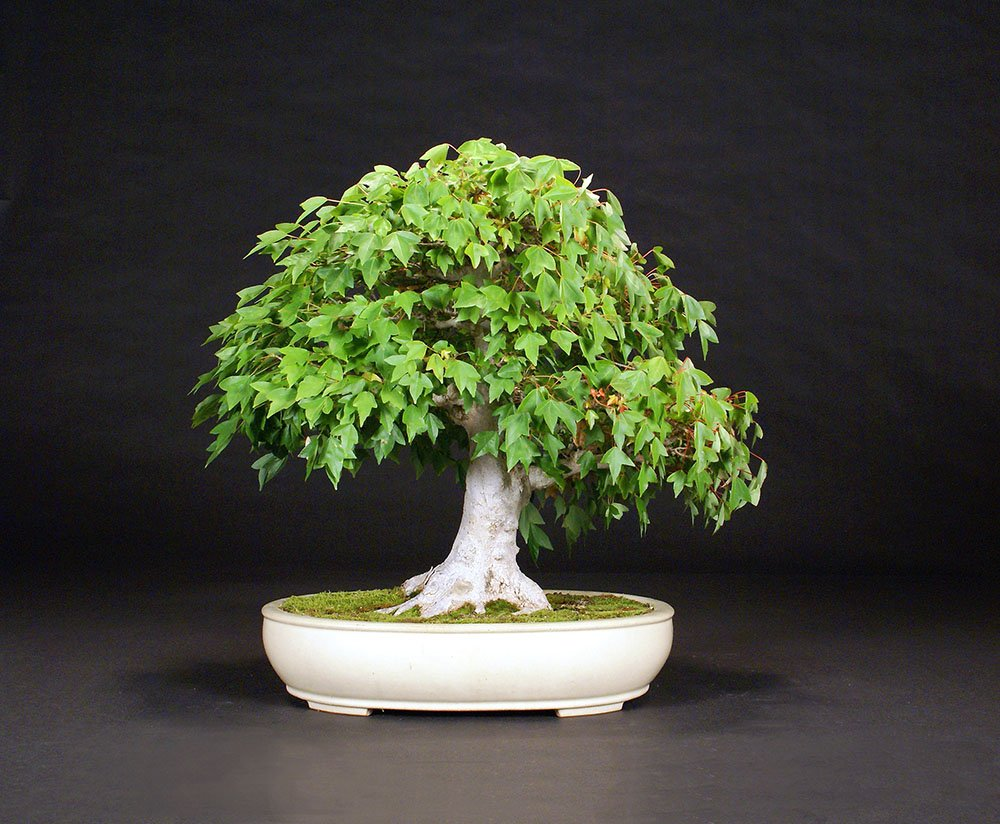 You are currently viewing 2016 Bonsai Show