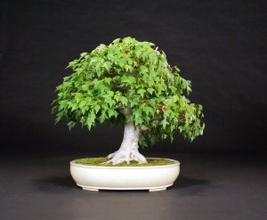 Read more about the article 2016 Bonsai Show