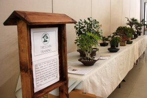 Read more about the article May 2019 – Preparing Trees for Show