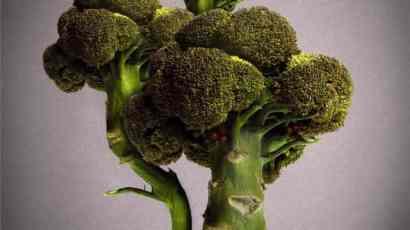 broccoli-bonsai