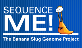How to sequence a banana slug genome