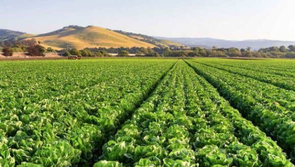 Salinas Fosters AgTech Innovation