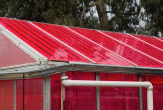 Solar greenhouses generate electricity and grow crops at the same time