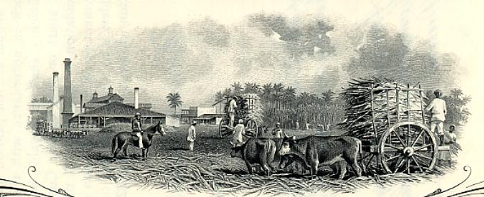 Terratenientes extranjeros en Santa Isabel