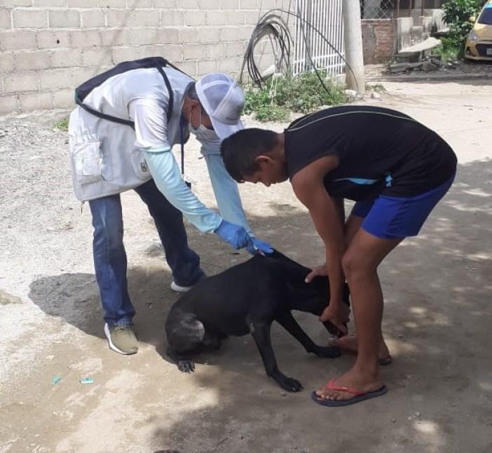 Distrito avanza con vacunación canina y felina