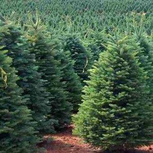 Tree Size