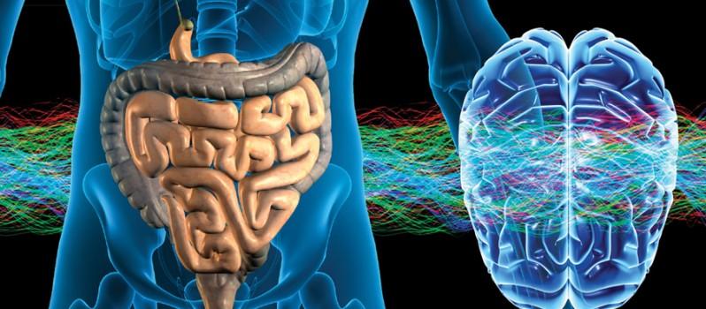 """Résultat de recherche d'images pour """"cerveau intestinal"""""""