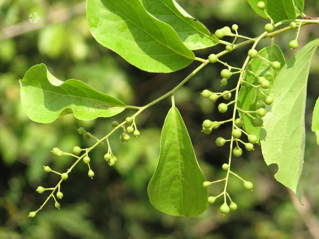 plantes-légales-1-1024x768