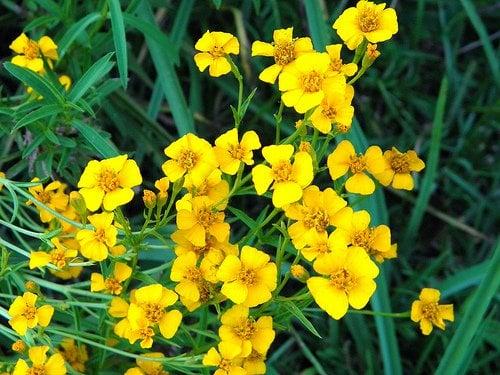 plantes-légales-3