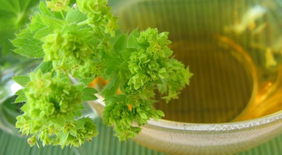 Herbes pour prévenir et réduire les fibromes