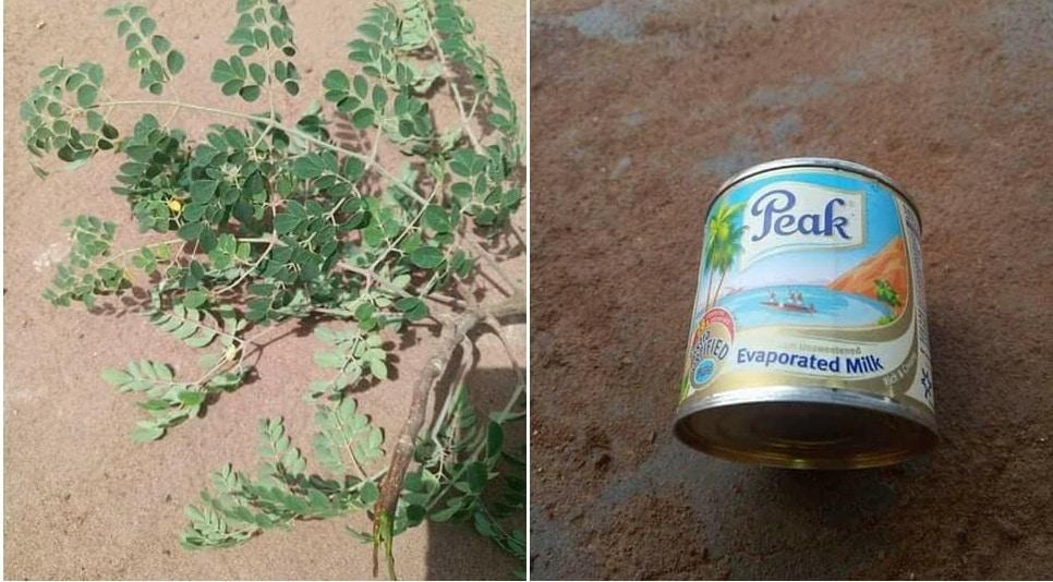 Comment éliminer le poison en utilisant des feuilles de moringa et le lait peak.