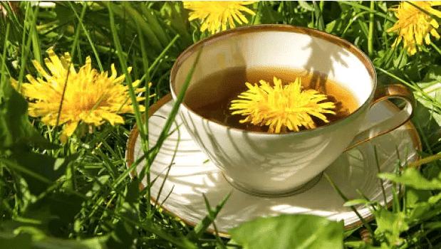 La plante qui traite le cancer, l'hépatite, les maladies du foie, les reins, les estomes,  voici comment préparer