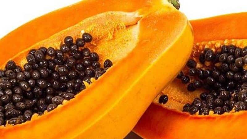 Graines de papaye pour renforcer l'intestin, le foie et les reins