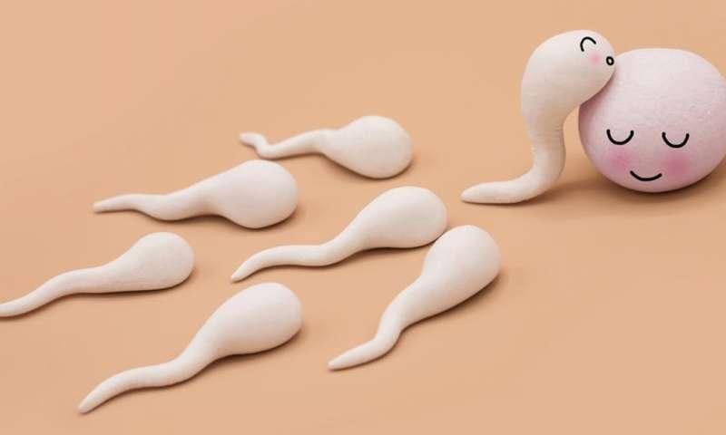 10 astuces pour augmenter le nombre de spermatozoïdes rapidement