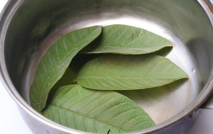 Remède de feuilles de mangue pour le diabète: