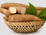 le manioc était un traitement efficace et peu coûteux permettant d'inverser la croissance du cancer