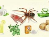 Traitement naturel pour les piqûres d'araignées – sel, citron et pommes de terre