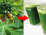 Comment guérir définitivement l'ulcère avec l'eau de papaye vert