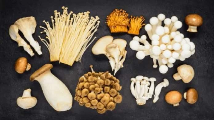 champignon anticancer