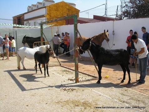 Feria de septiembre, animales.