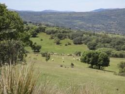 Paisaje de Sierra Morena cerca de Venta Quemada