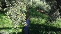 Arroyo de la Porrosa