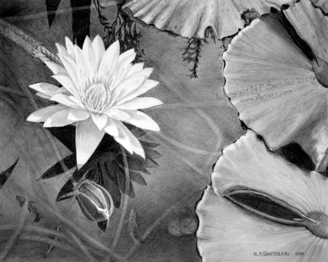 Open Edition Prints of The Wish pencil drawing by Santoleri 2013