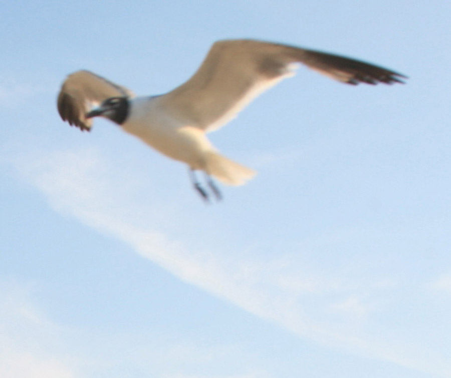 Seagull photo from my archives 02