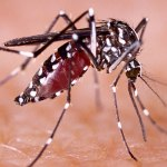 Sanytel: Registro Epidemiologico