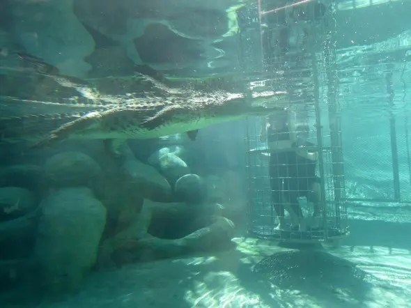 Crocodile cage divine in Oudsthoorn