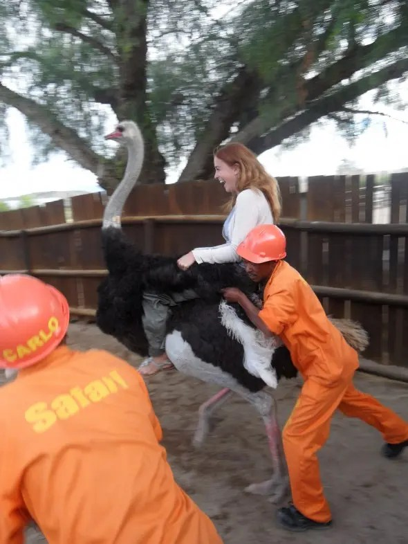 Riding an ostrich in Oudtshoorn
