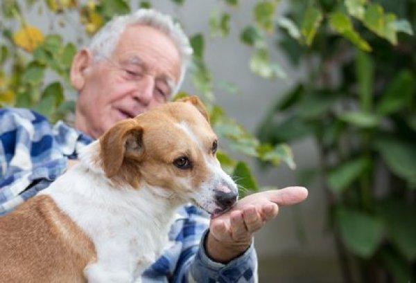 Un anziano all'aperto con il proprio cane
