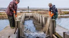Due pescatori raccolgono il pesce da reti sulle banchine nel Parco del Delta del Po
