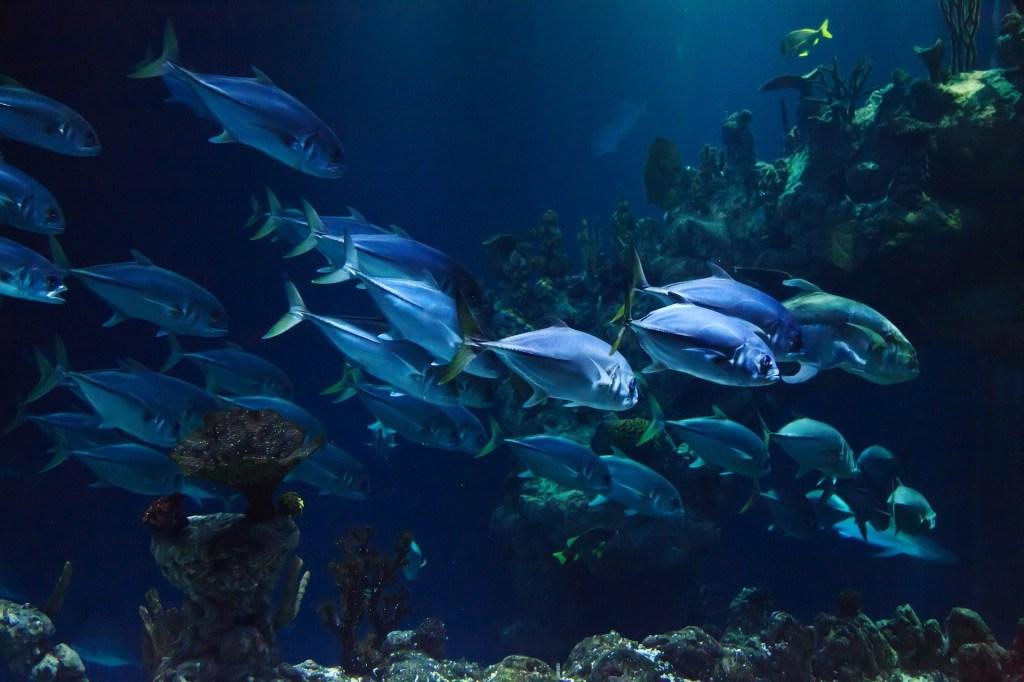 mare biodiversità