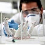 esperimenti animali