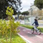 Un albero piantato da poco in una grande città, con una donna in bici sullo sfondo