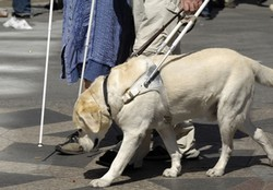 Le chien est-il impur en islam ? Non pour l'Union des mosquées de France, voici pourquoi