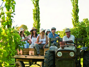 Um roteiro para amantes do vinho - Viagem Aromas e Sentidos