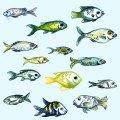 Fisch Pattern Aquarelle