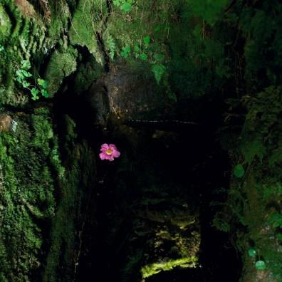 Sancreed Well, Cornwall, 2012